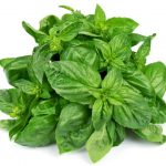 Basil Leaves To Combat Swine Flu